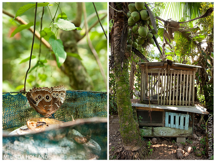 Costa Rica (butterfly, coconuts and hen house)